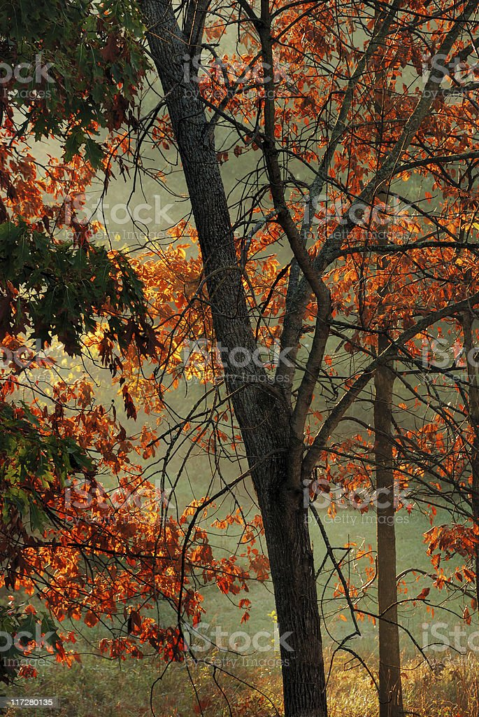 Backlit fall leaves royalty-free stock photo