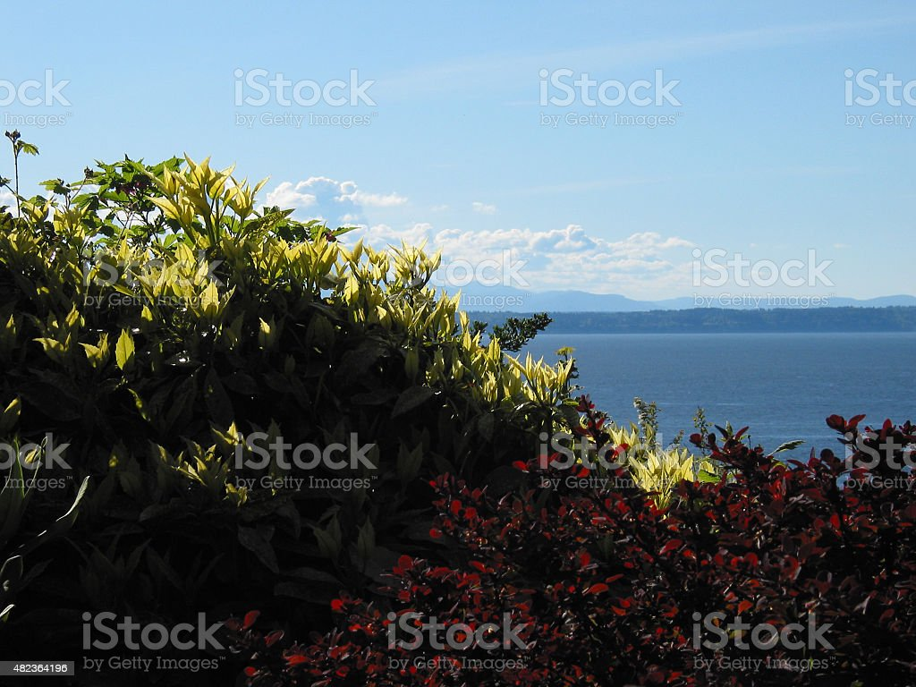 Backlit Foliage in Front of Puget Sound stock photo