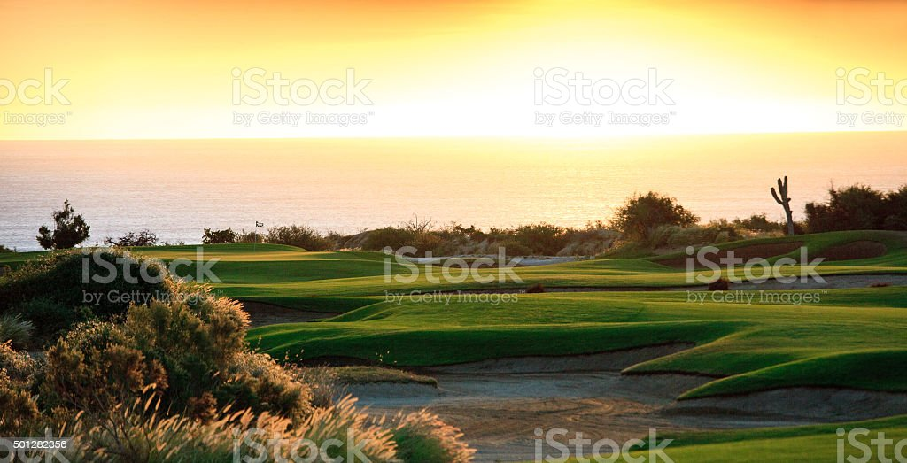 Backlit Golf Course Panorama With Saguaro Cacti stock photo