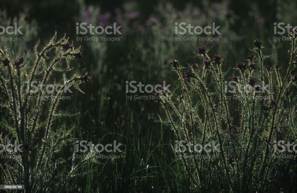 Backlit marshes Bodmin Moor stock photo