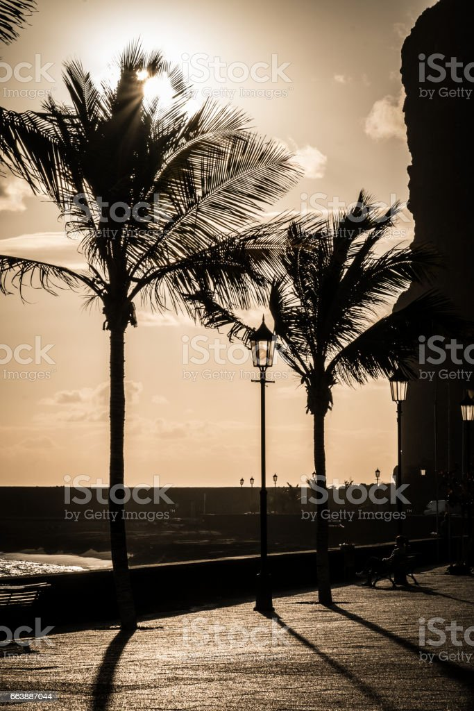 Backlit Palm Trees on Beach promenade of Puerto de Tazacorte at sunset. La Palma, Spain stock photo