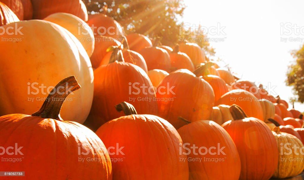 Backlit Pumpkins For Sale stock photo