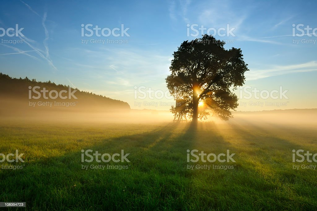 Backlit Tree in Morning Mist on Meadow at Sunrise royalty-free stock photo