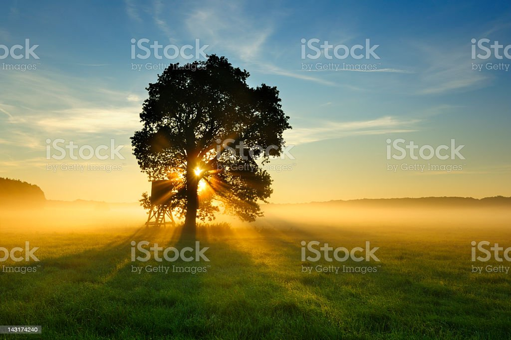 Backlit Tree in Morning Mist on Meadow at Sunrise stock photo