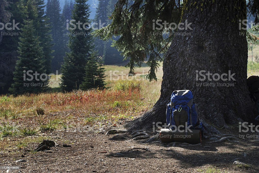 Backpack Leaning Against a Tree royalty-free stock photo