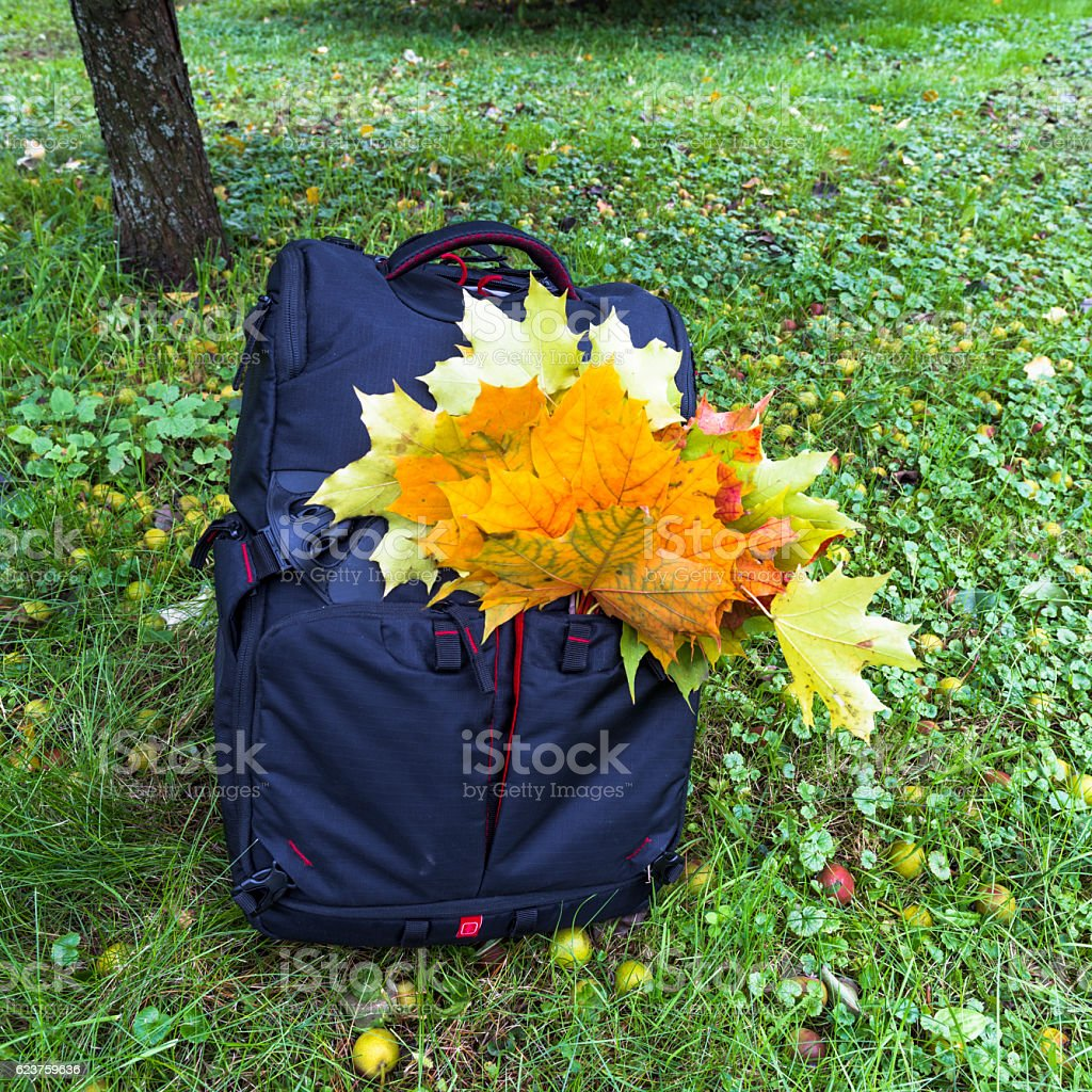 Backpack, leaves and apples stock photo