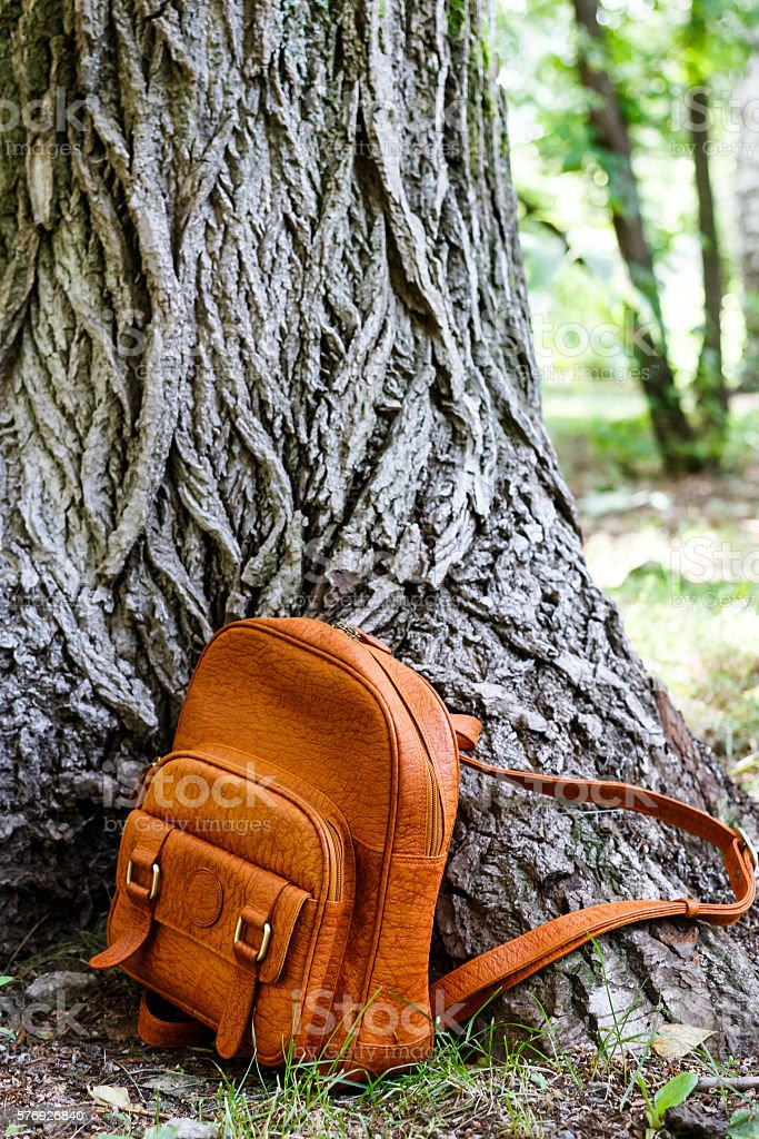 backpack on the background of the huge old tree stock photo