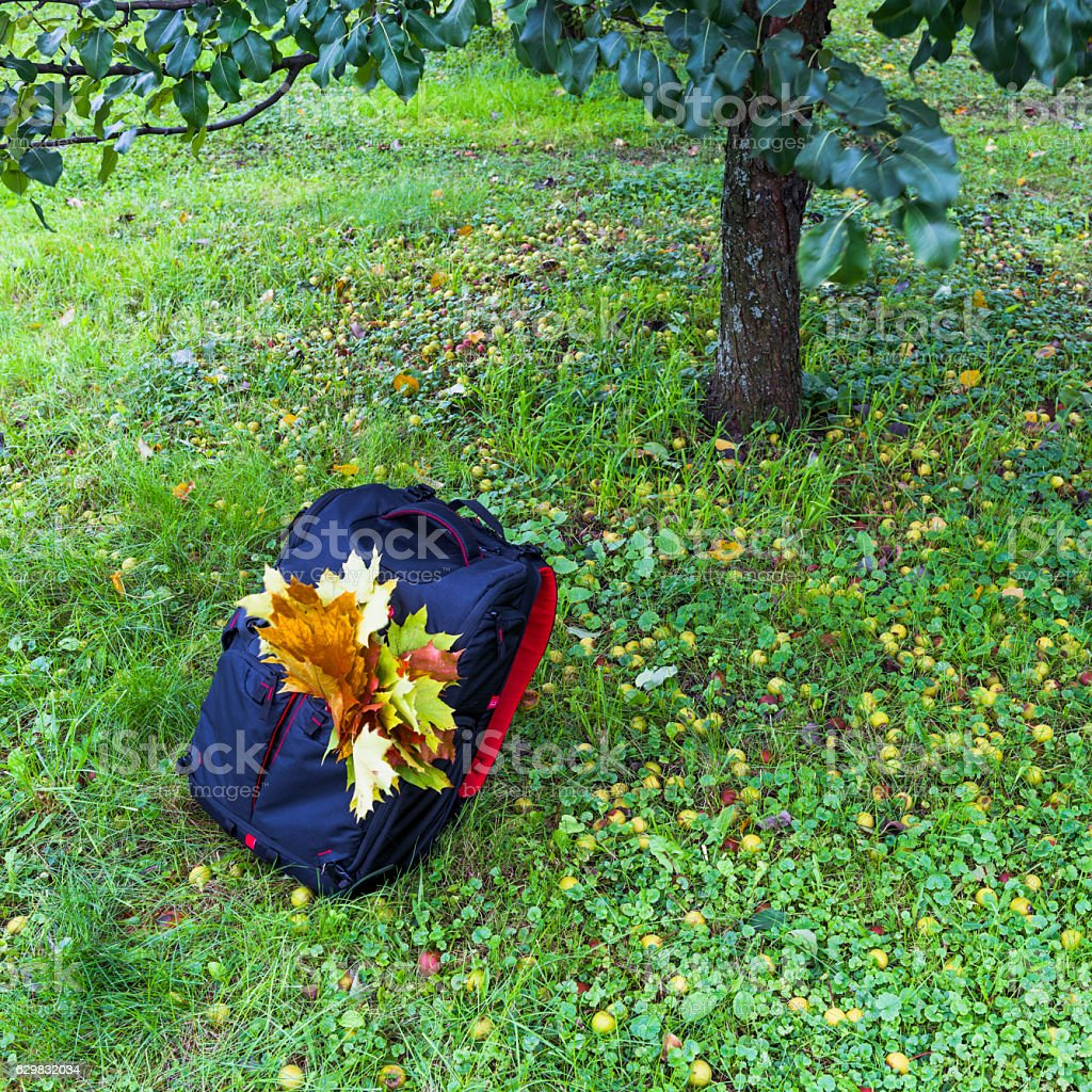 Backpack under the Apple tree stock photo