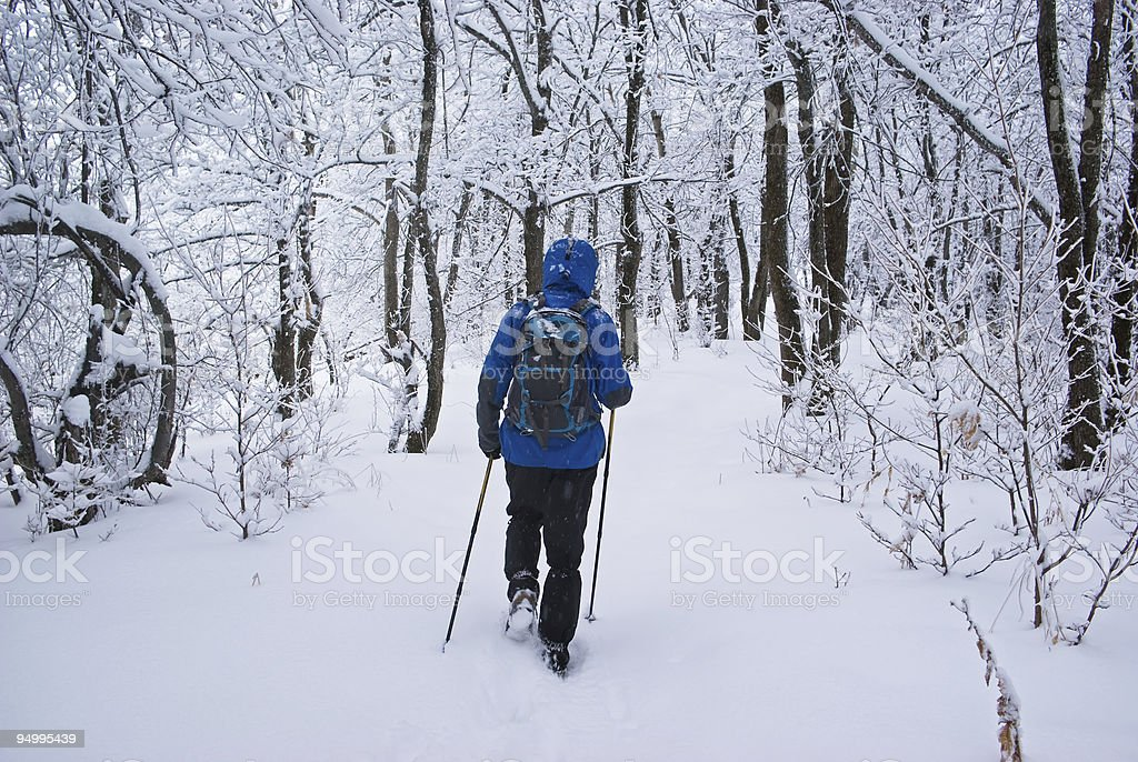 Backpacker man going in winter forest royalty-free stock photo