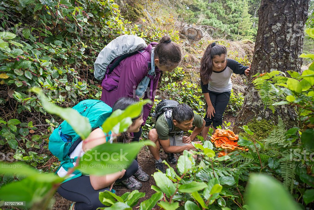 Backpackers Examine an Edible Orange Mushroom while Hiking Through Forest stock photo