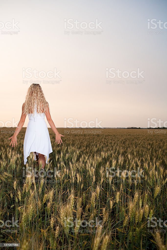 Backview young woman walking in wheat field royalty-free stock photo