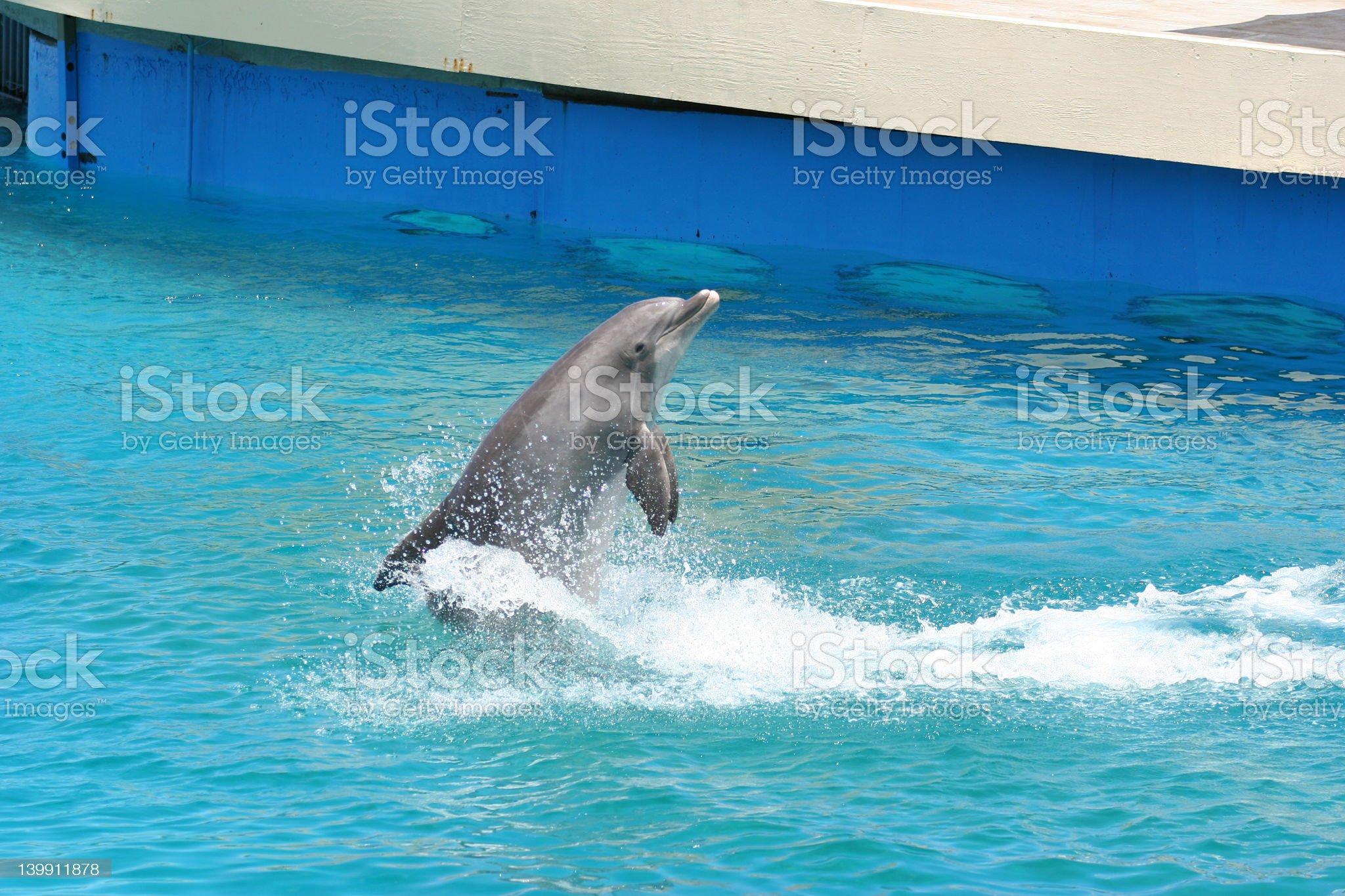 backwards dolphin royalty-free stock photo