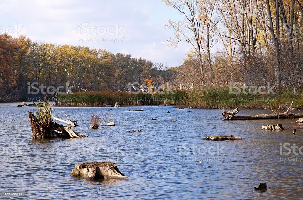 Backwater at the river Tisza in autumn,Hungary royalty-free stock photo