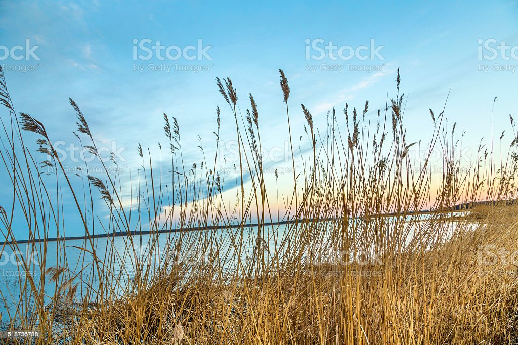 backwater landscape at the island of Usedom stock photo