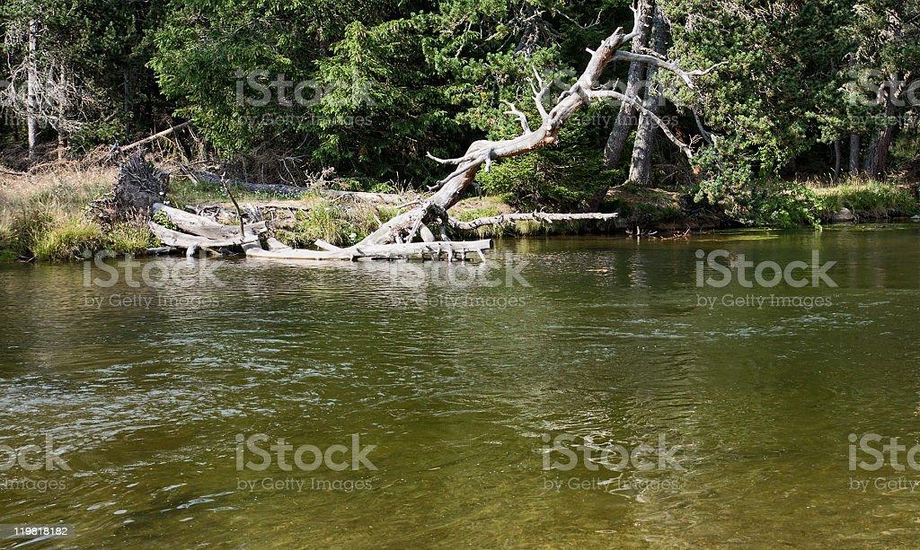 Backwater royalty-free stock photo