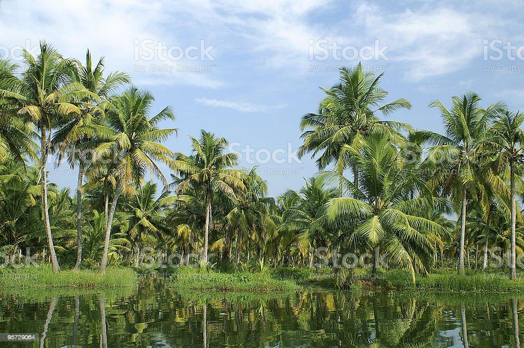 backwaters of Kerala royalty-free stock photo