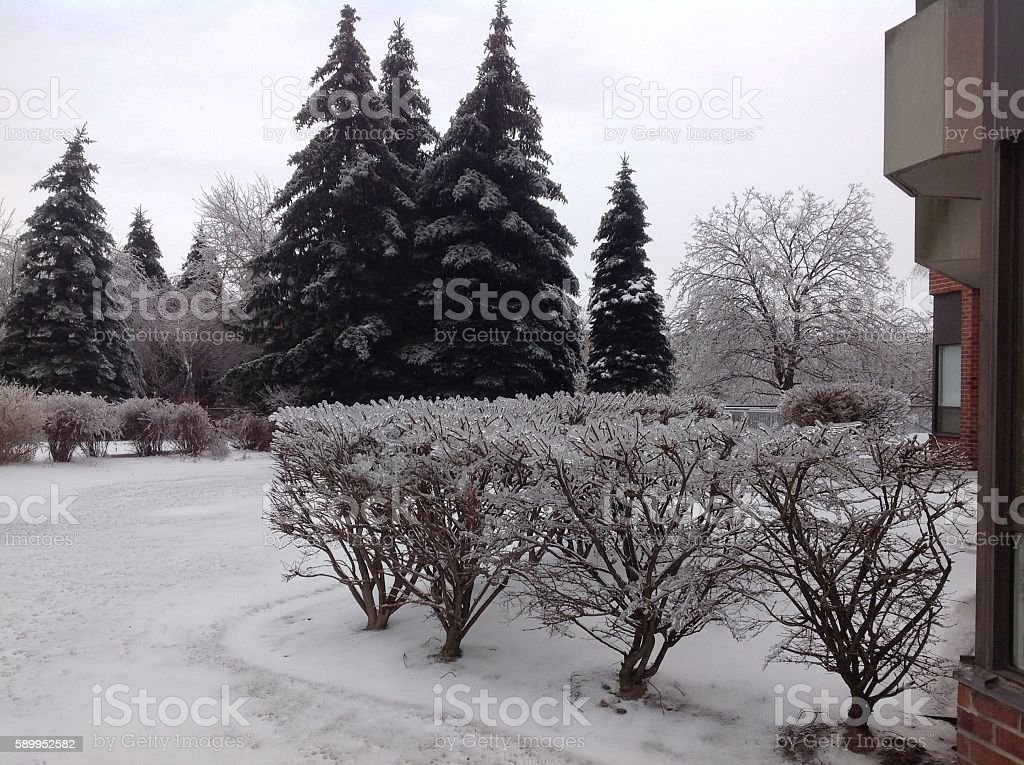 backyard after the freezing rain stock photo