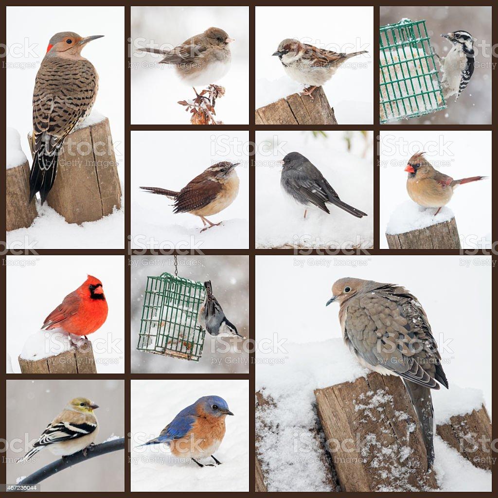 Backyard Birds in Snow stock photo