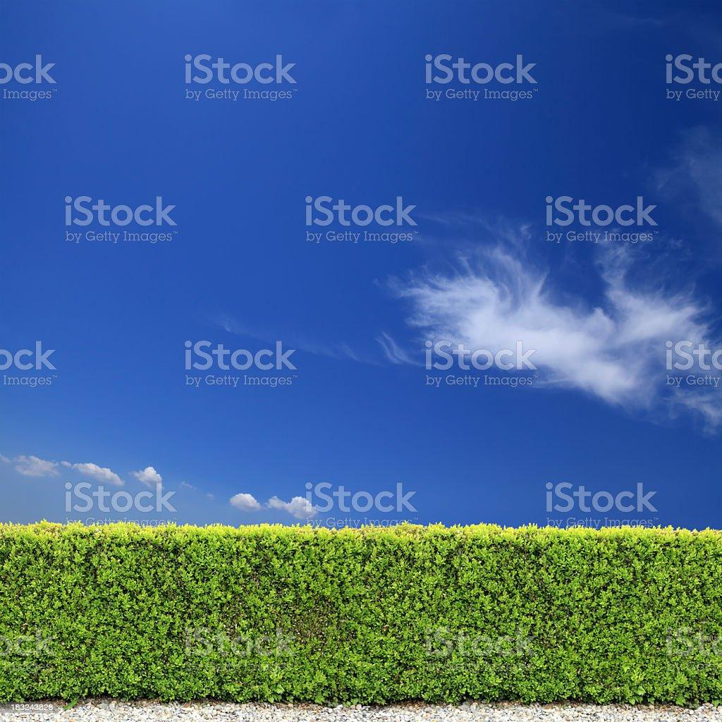 backyard bush fence over clear sky stock photo