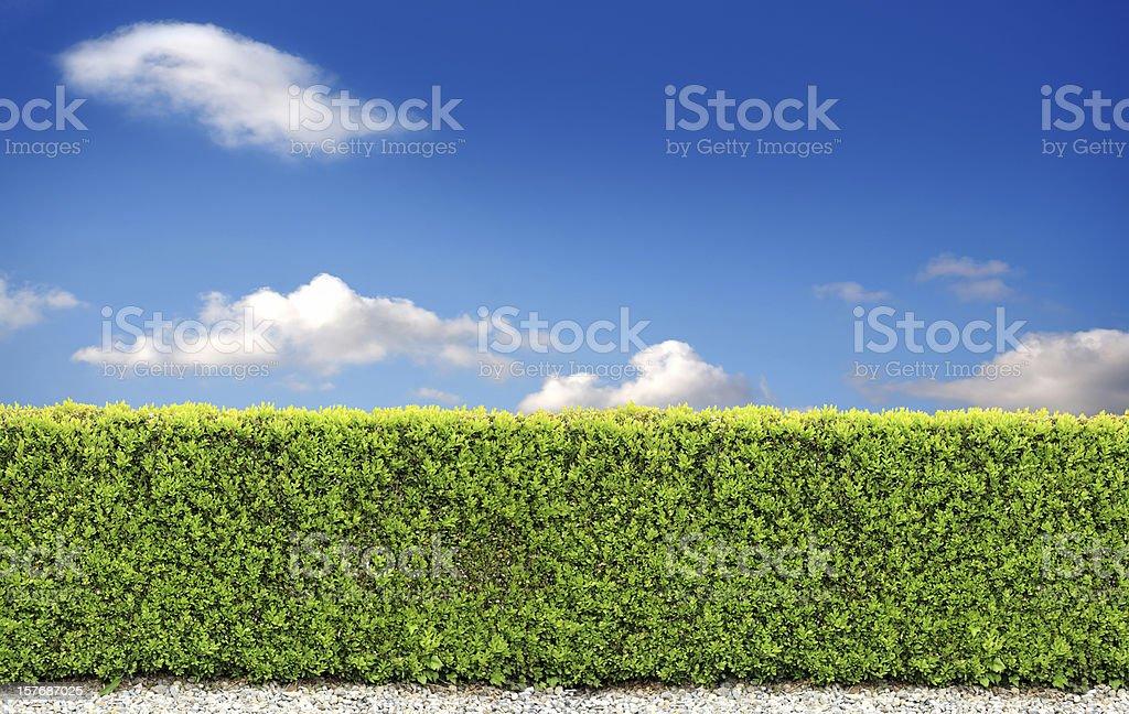 backyard bush fence royalty-free stock photo