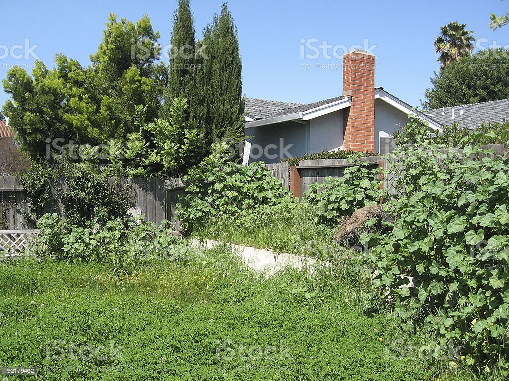 Backyard in need of gardening stock photo