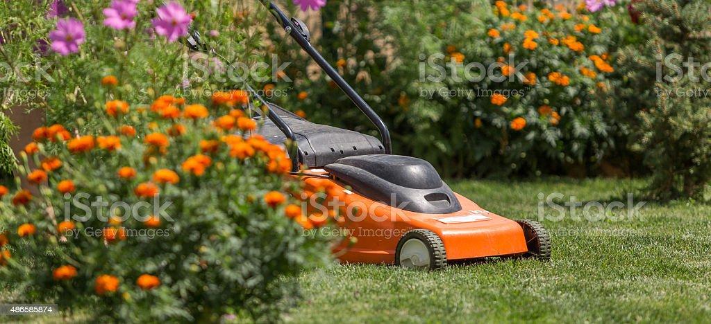 backyard lawn stock photo