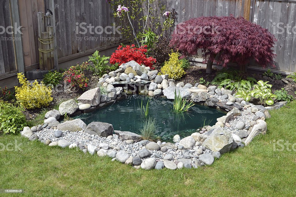 Backyard Pond stock photo