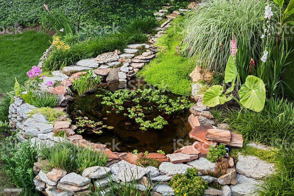 Backyard pond stock photo