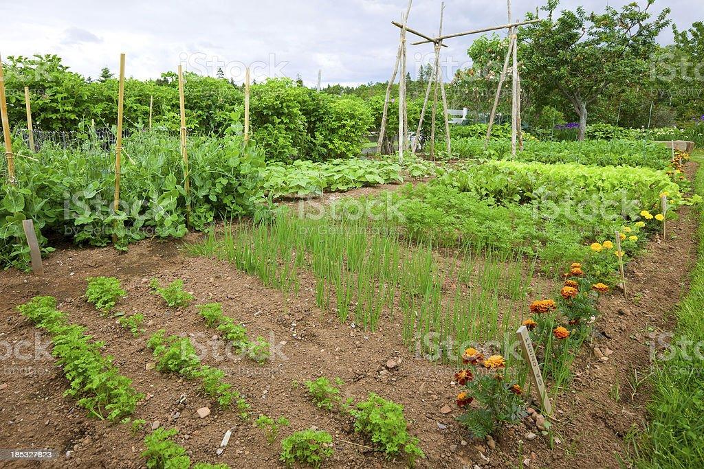 Backyard Vegetable Garden royalty-free stock photo