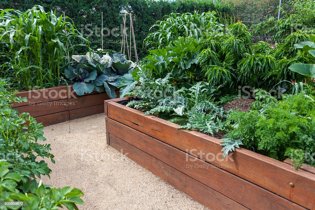 Backyard vegetable garden stock photo