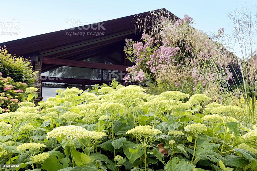 Backyard with hydrangea,rose shrub and ornamental grasses stock photo