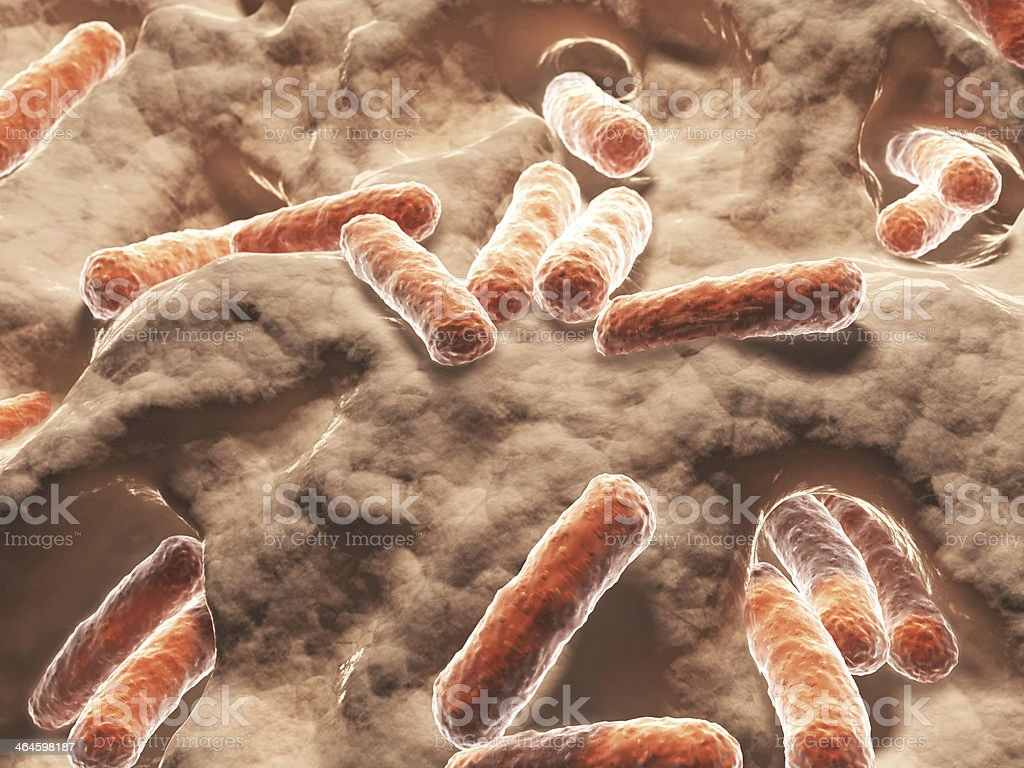 Bacteria, bacilli stock photo