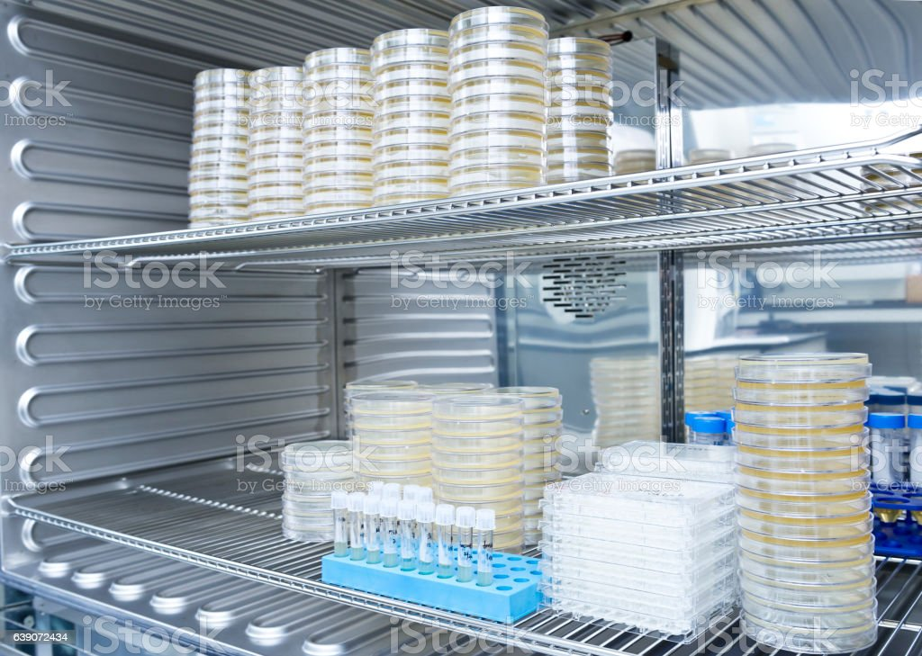 Bacteria cells were incubated on the microplates and tubes stock photo