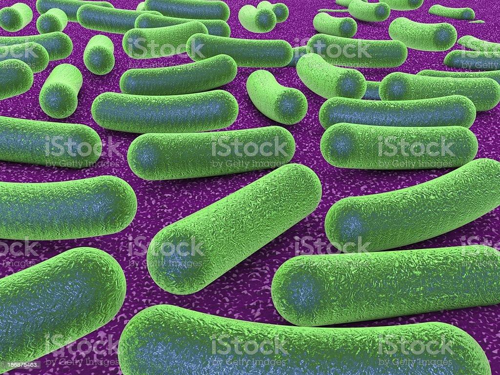 Bacteria royalty-free stock photo