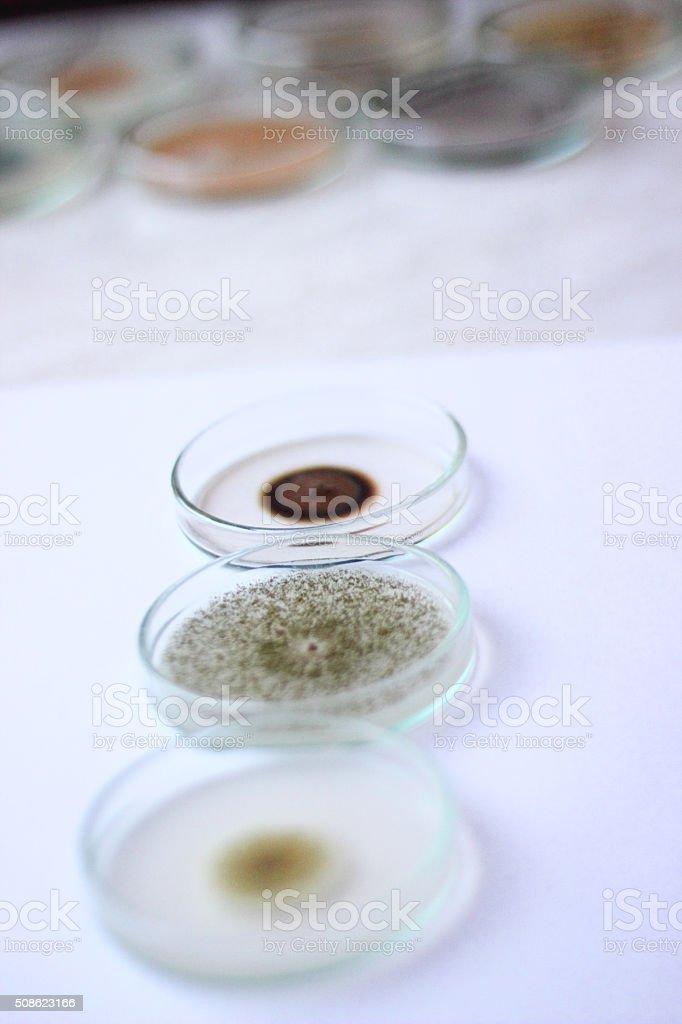 Bacteria stock photo