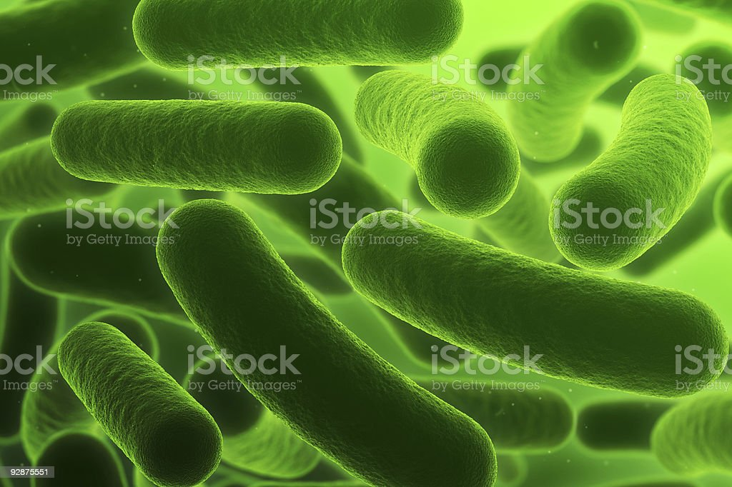 Bacteria royalty-free stock photo