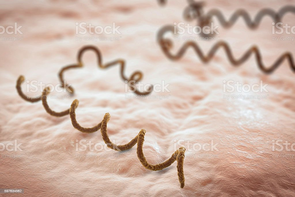 Bacteria Treponema pallidum stock photo