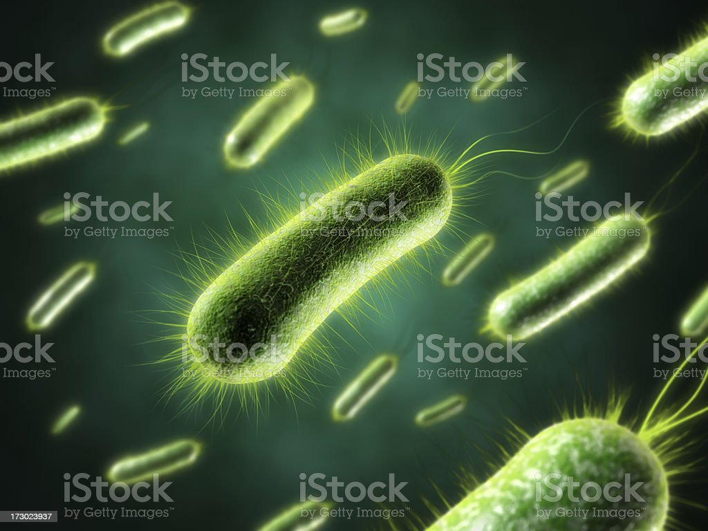 Bacteria with fur closeup royalty-free stock photo