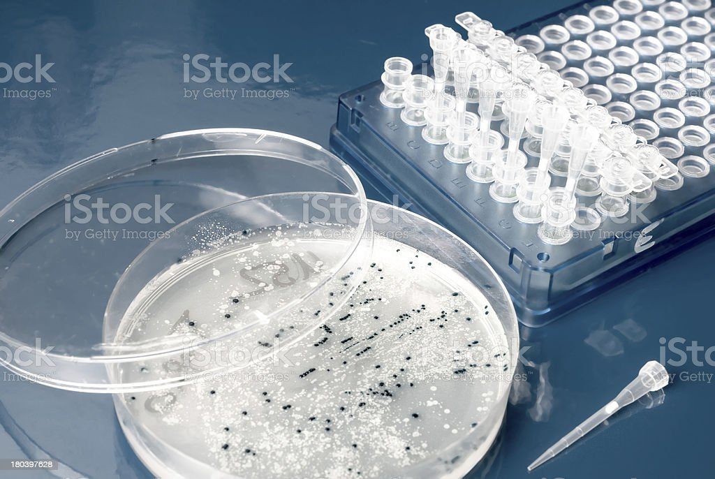Bacterial colonies on agar plate stock photo