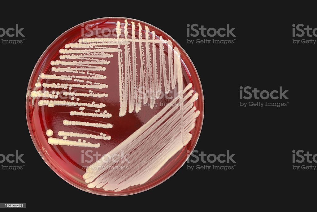 Bacterial colonies. royalty-free stock photo