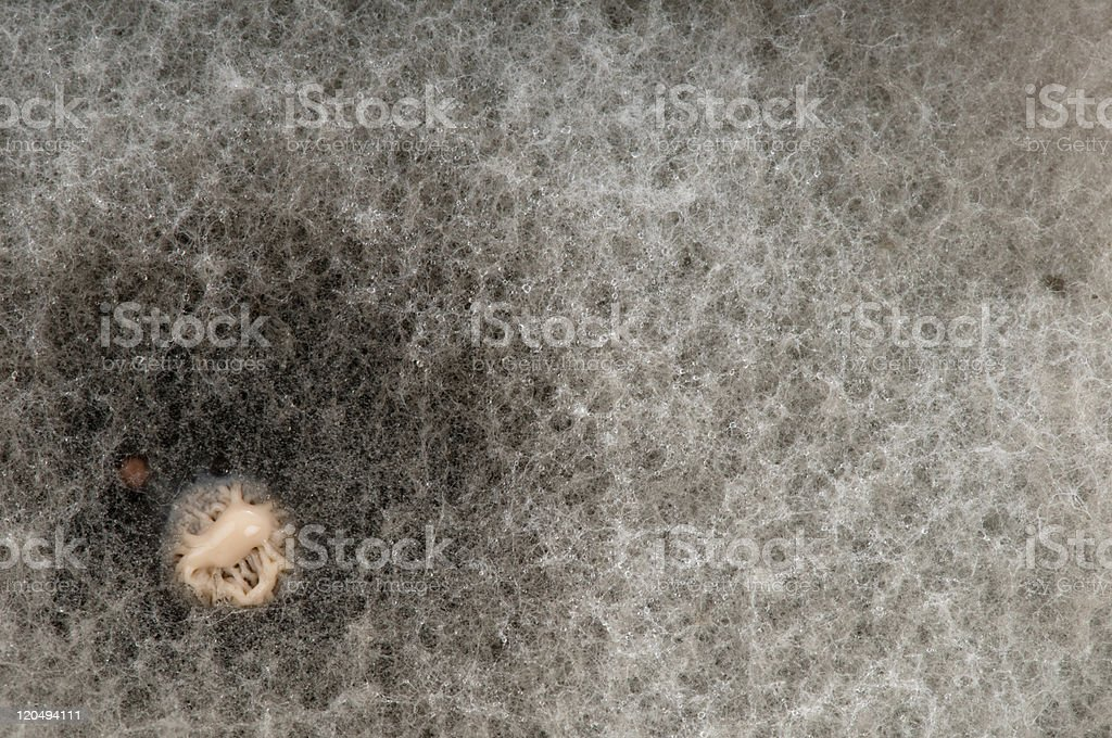 Bacterial colony in the centre of a mould. royalty-free stock photo