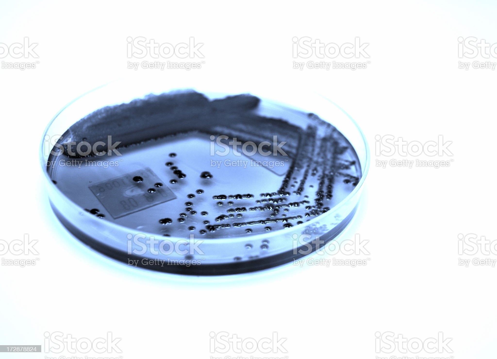 Bacterial Culture, image tinted blue royalty-free stock photo