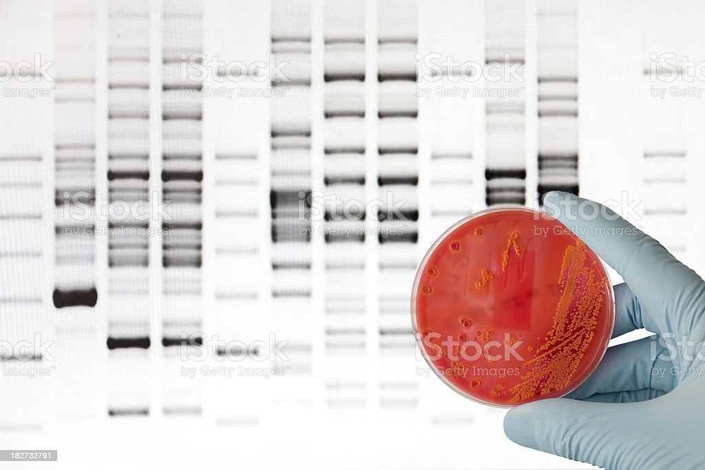 Bacterial DNA analysis stock photo