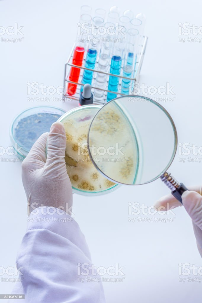 bacterial experiments. stock photo