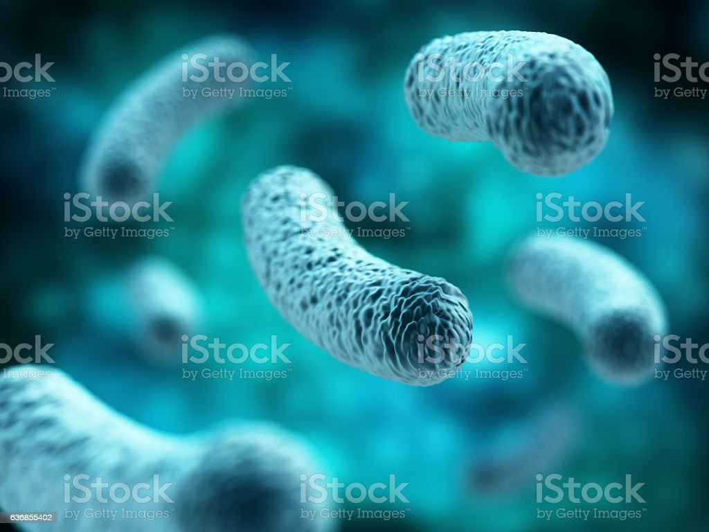 Bacterial infection. Rod-shaped Lactobacillus bacteria. stock photo
