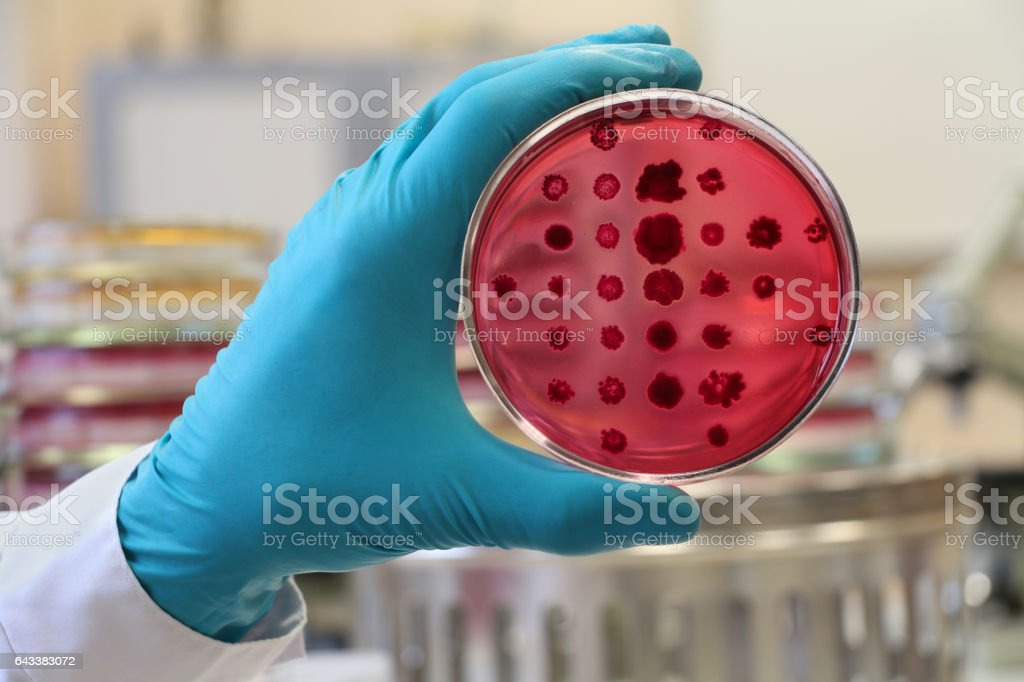 Bacteriologist  holding a red Petri dish on the laboratory background stock photo