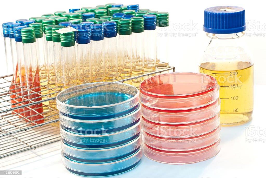 bacteriology equipment (petri dish, tube, bottle) stock photo