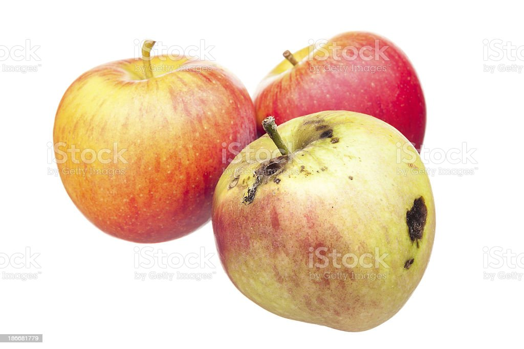 Bad apple metaphor stock photo