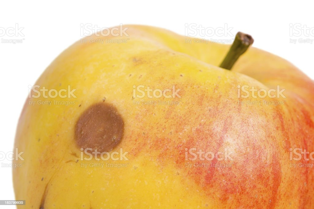 bad apple stock photo