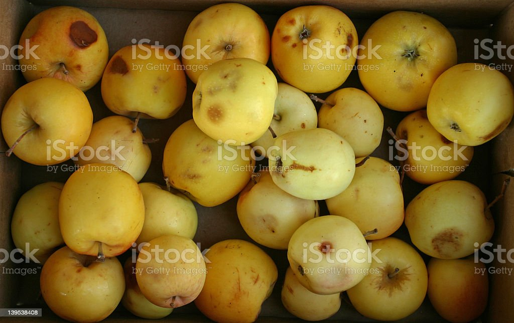 Bad Apples stock photo